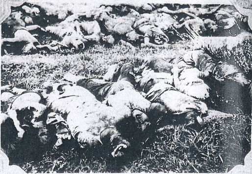 Massacred_corpses_of_Japanese_victims_of_the_Tungchow_Massacre_2