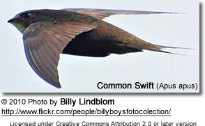 CommonSwift3